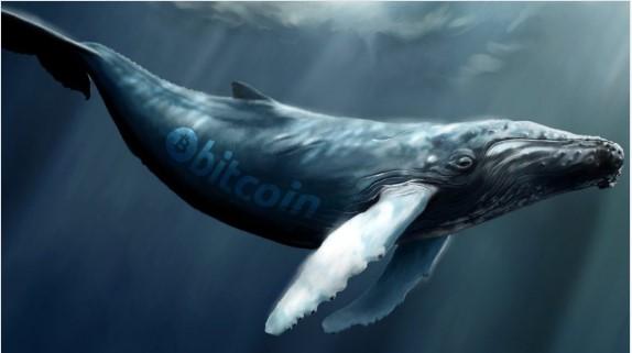 ビットコインクジラの人口は1,882に急上昇-3年間で最高レベル
