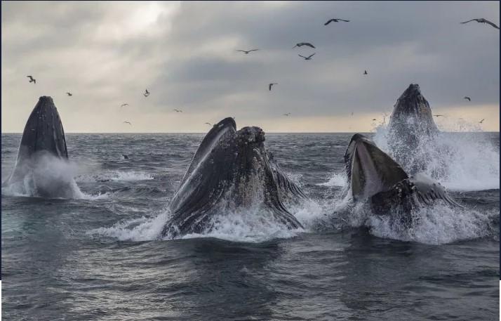 ビットコイン「クジラ」の数は半減後2%上昇