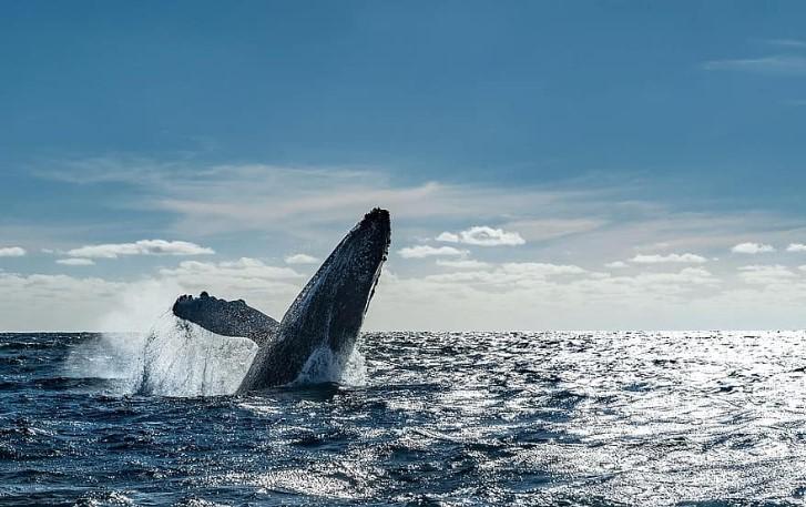 これらのアルトコインはクジラによってより高く押されています