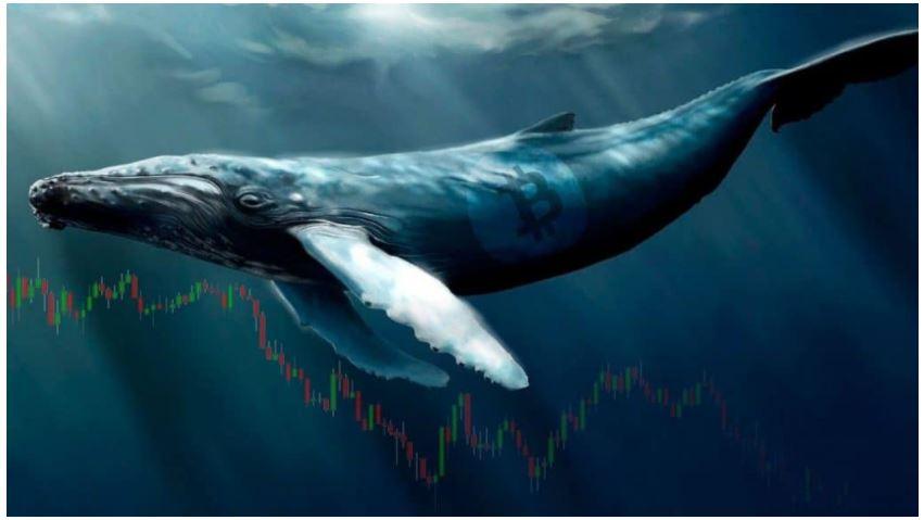 ビットコインクジラの蓄積が爆発する:Glassnodeの最近のレポートをチェックしてください